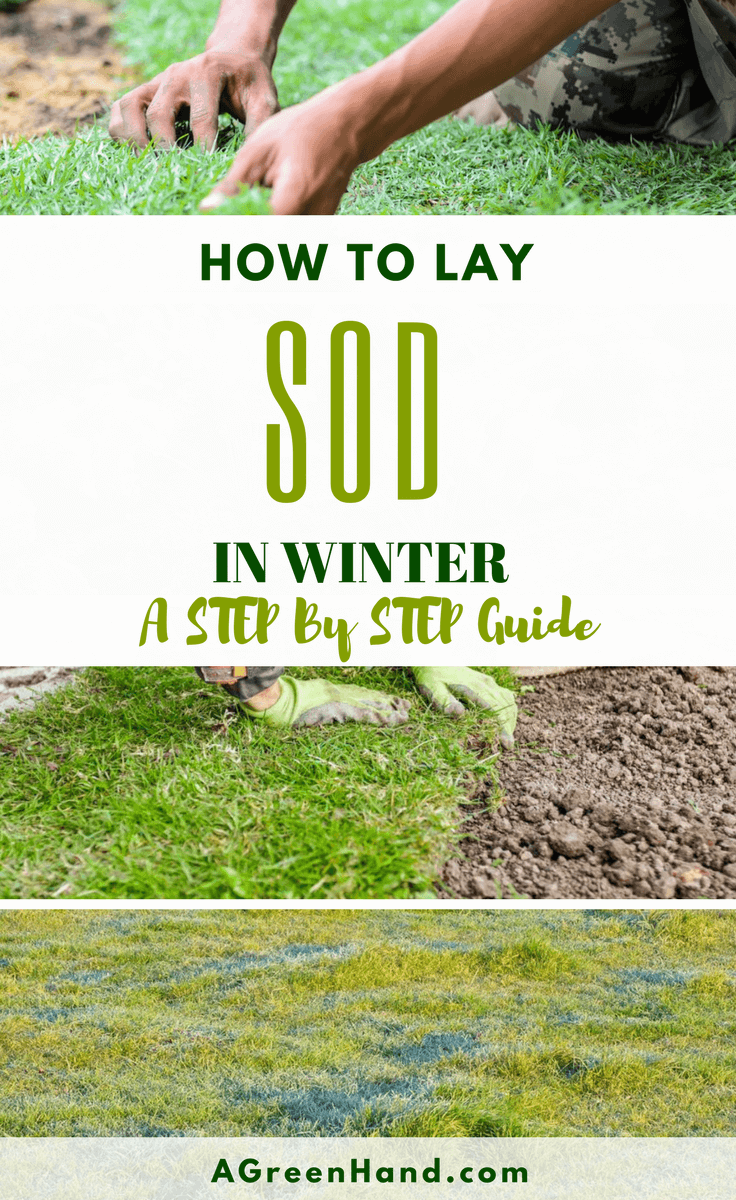 How To Lay Sod In Winter. Should we lay sod in winter? Well, if you ask me I will say it is not the right time. Since laying sod is best during April to October. But we are never perfect and have to go in the opposite direction at times. Since I feel sodding during the winter, which is a dormant season, is a little bit risky. #laysod #wintergardening #wateringsod #preparesoil