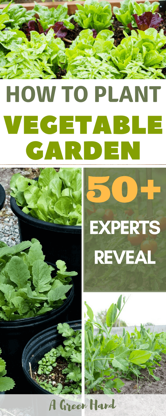 50 ideas to build your first vegetable garden a green hand for How to build a vegetable garden