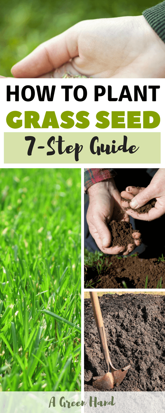 How To Plant Grass Seed: 7-Step Guide #grassseed #gardening #agreenhand