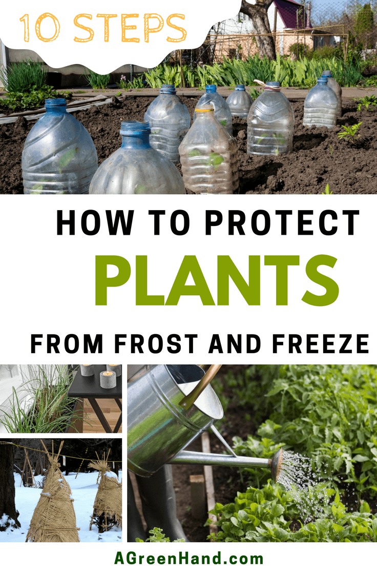 How To Protect Plants From Frost. When it comes to protecting your tender plants from frost or freeze damage, here are the things you need to know. You should be prepared from the start to keep your plants from suffering significant winter losses. #protectplants #wintergardening #covershrub #smalltrees #flowers #waterplants #growindoor