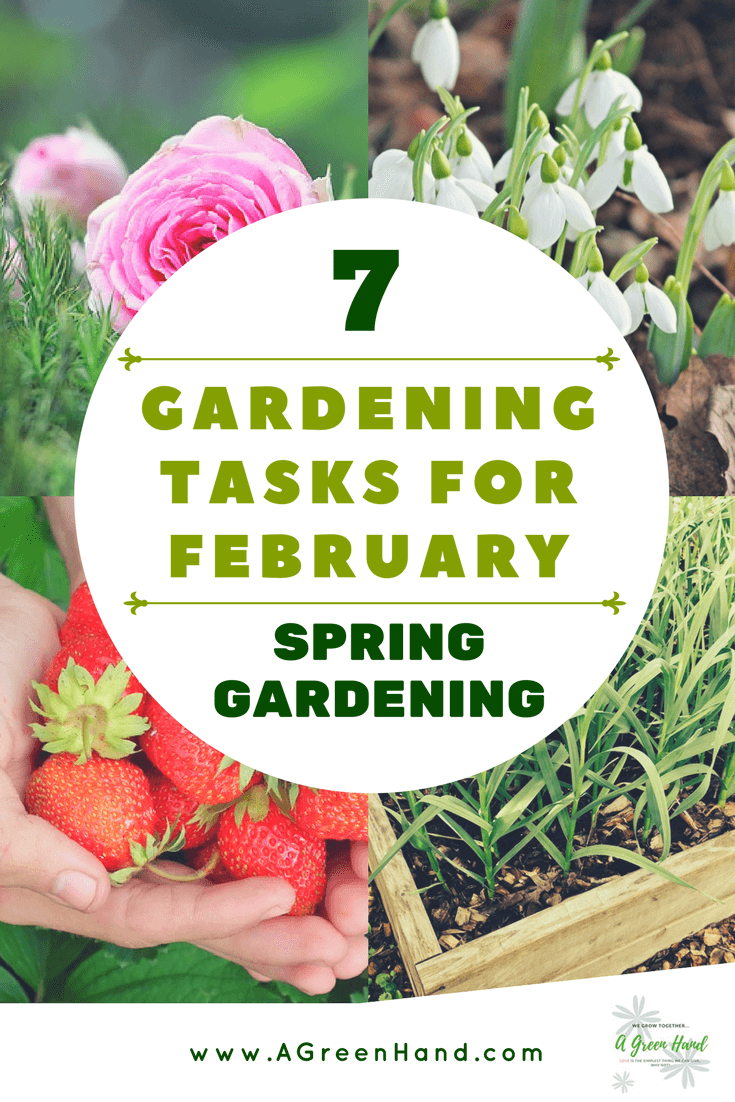 There are many activities you can do in your garden at any time of the year. However, some are better conducted at a specific period. So, what gardening plans should you start at such an early part of the year? Here, we take a look at several gardening tasks and projects for February. #growinggarlic #growflowers #snowdrops #pruneroses #conductlawncare #removeweeds #weedcontrol #mulching #ornamentalgrass