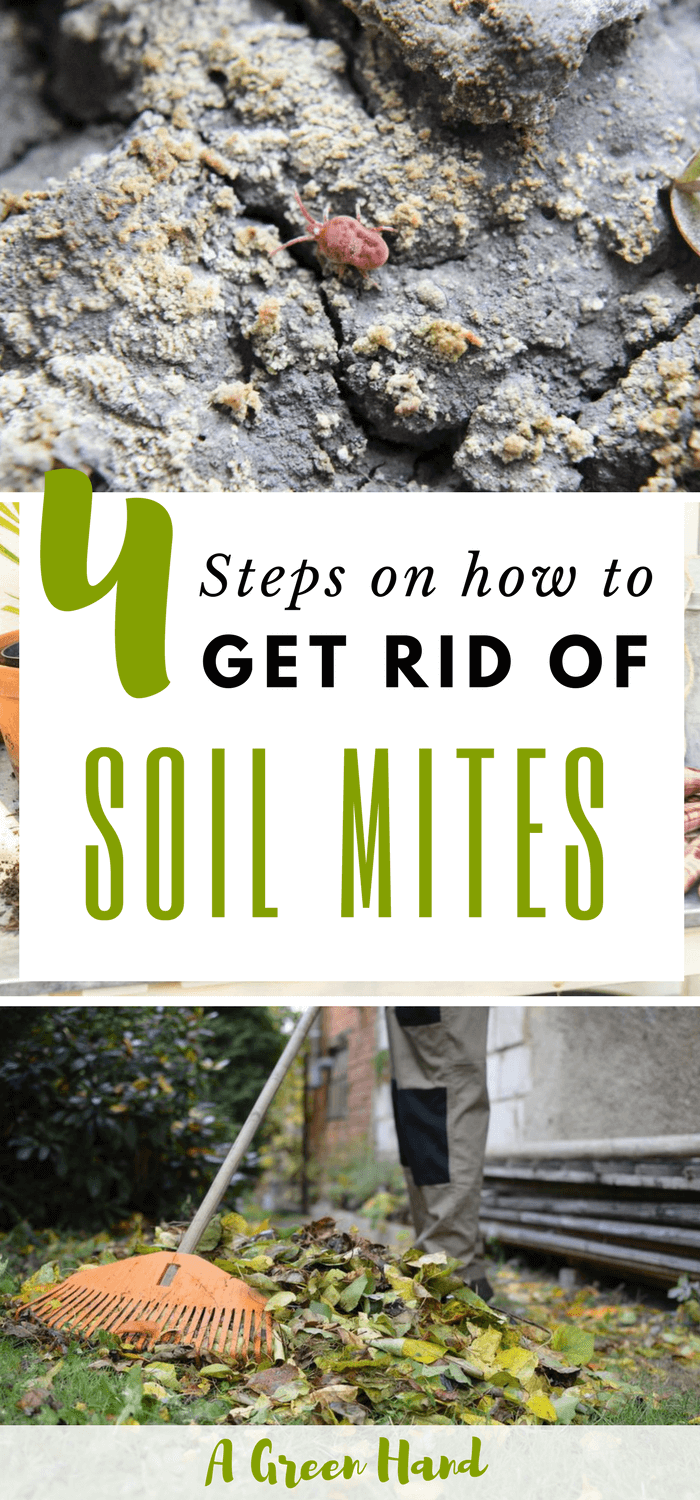 How To Get Rid Of Soil Mites In 4 Steps A Green Hand