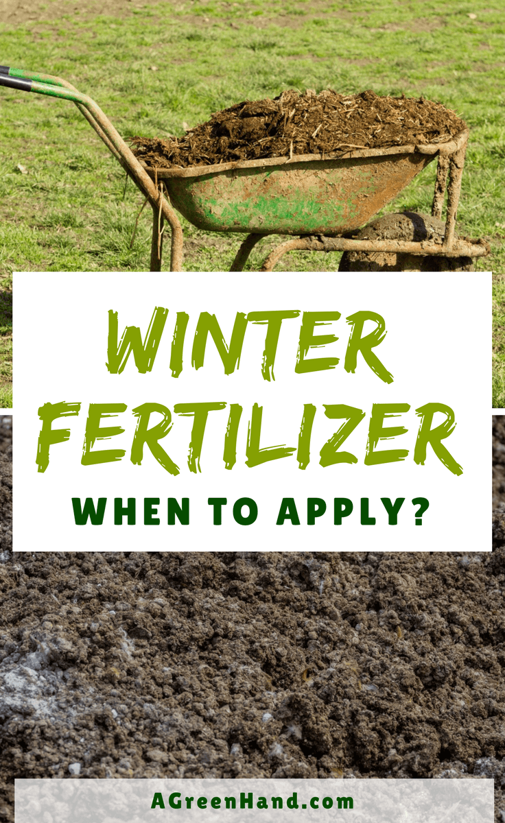 When to apply winterizer fertilizer using spreader is a daunting dilemma faced by many turf owners. #winterfertilizer #wintergardening #lawnspreader #organicwinterizer