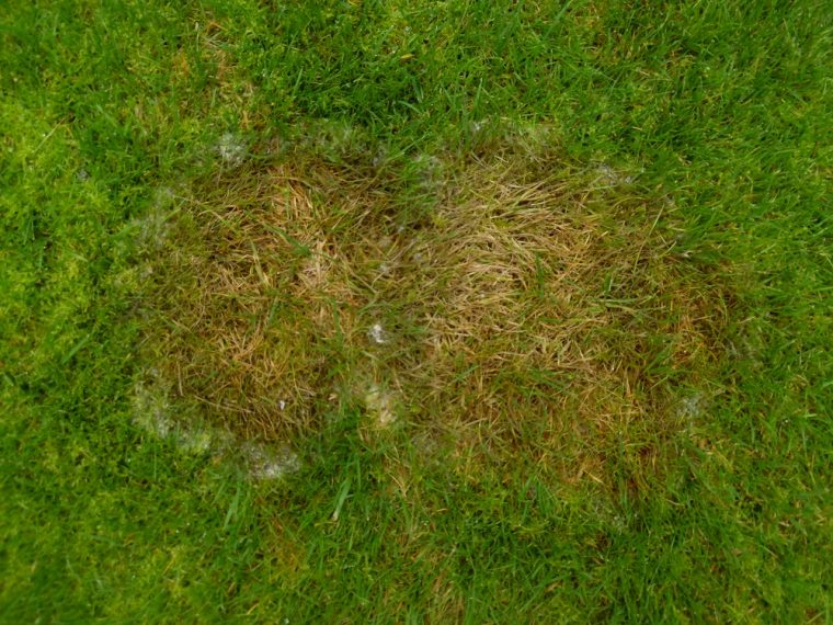 How to Deal with Grass Fungal Diseases