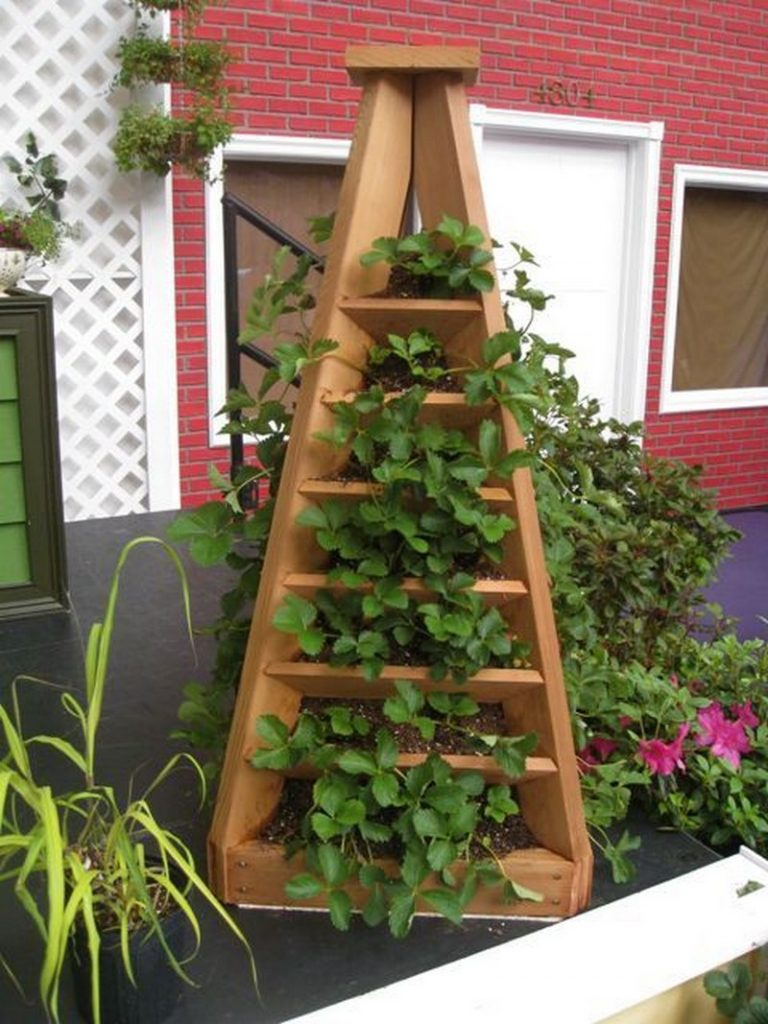 Strawberry Garden Ideas