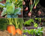6 Fantastic Vegetables To Plant In March