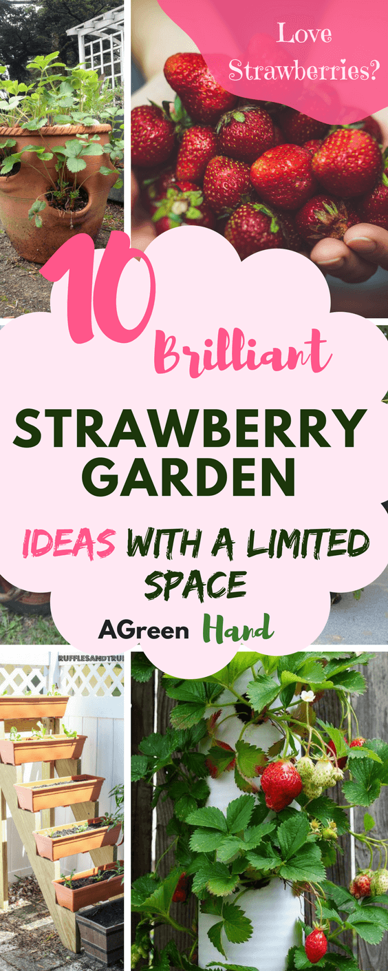 Charming strawberry planting ideas contemporary garden for Strawberry garden designs