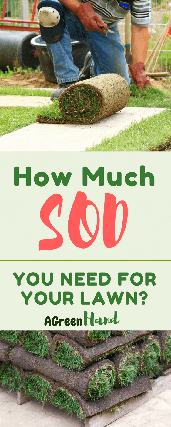 The issue is determining how much sod you need for your lawn. Lucky for you, we've gathered all the needed information about how to measure for sod. #lawncare #sod #gardeningtips #agreenhand