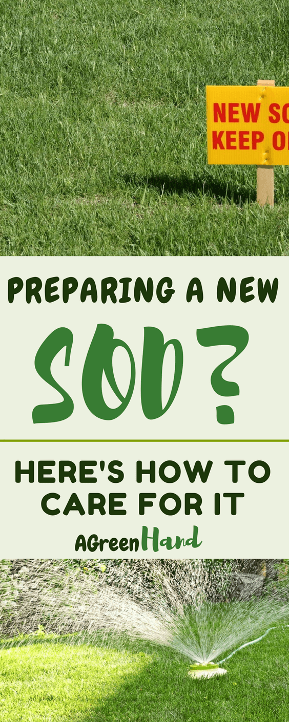 how exactly should you tend to your sod? Is it as simple as watering it every morning until the lawn is good enough for mowing? Well, we've compiled essential information to help you learn how to care for new sod #sod #lawncare #gardeningtips #agreenhand