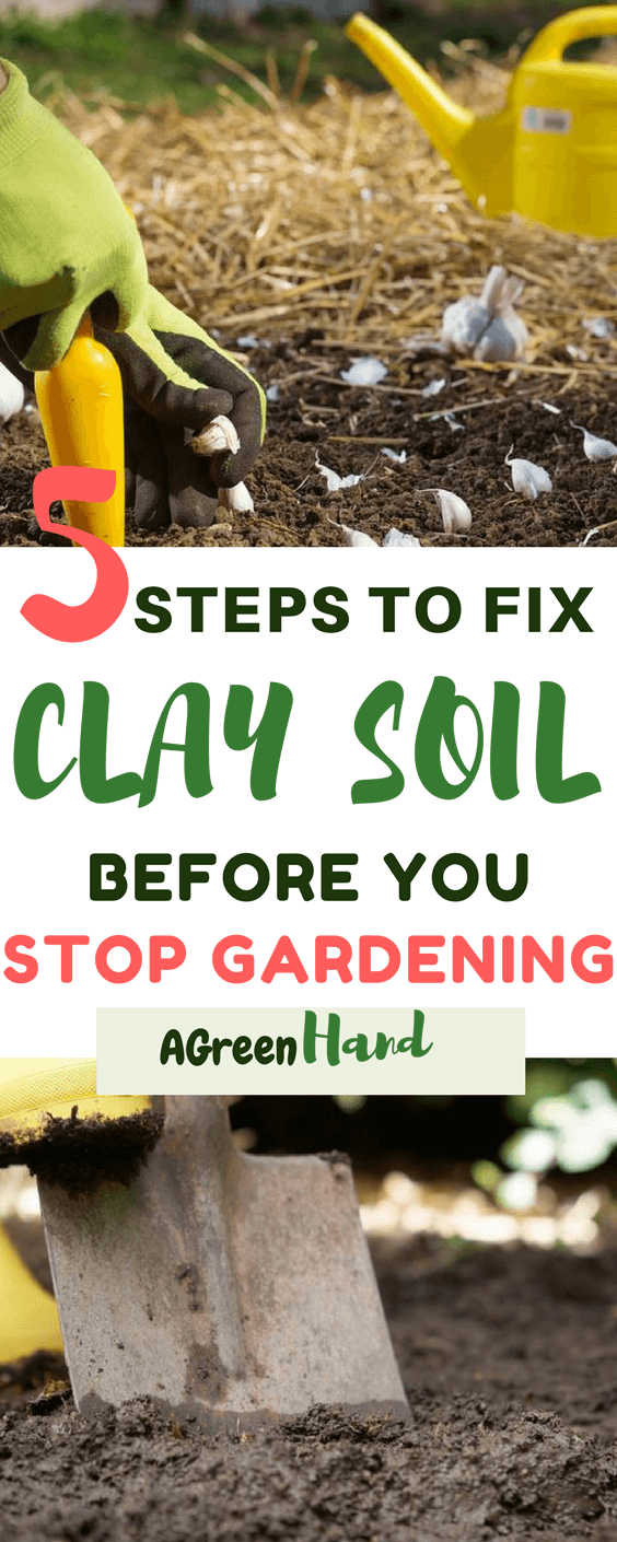 Improvement of your clay soil will take time. You cannot expect overnight results, neither did I? What you can do is follow the above steps that we mentioned and you should notice the improvement every year. You can expect a plant friendly soil in a few years.