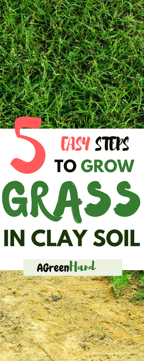 Clay soil might seem hard to work with when you need to plant grass. Everything from cultivating it to watering always appears more tedious than other soils but if you follow the easy steps above you should not have any trouble growing grass that will withstand all seasons.