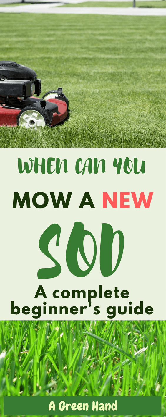 In order to have a good start for your lawn, you need to know when to mow sod. With our guide, you'll know what factors to consider in no time. #sod #lawncare #gardeningtips #agreenhand