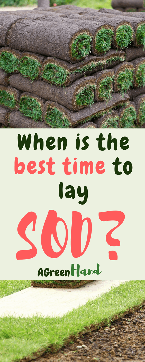 When is the best time to lay sod? you can lay sod at any time during the growing season, but each season has its elements that affect the state of the sod in your lawn #lawncare #sod #gardeningtips #agreenhand