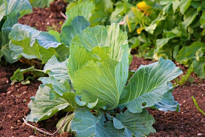 How to prepare soil for a vegetable garden