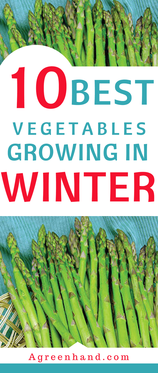 When it comes to winter vegetables and when to plant, it's usually around autumn. Some of them survive throughout winter and become ready to harvest in the spring. Others take all the way to summer before ending up bearing fruit.