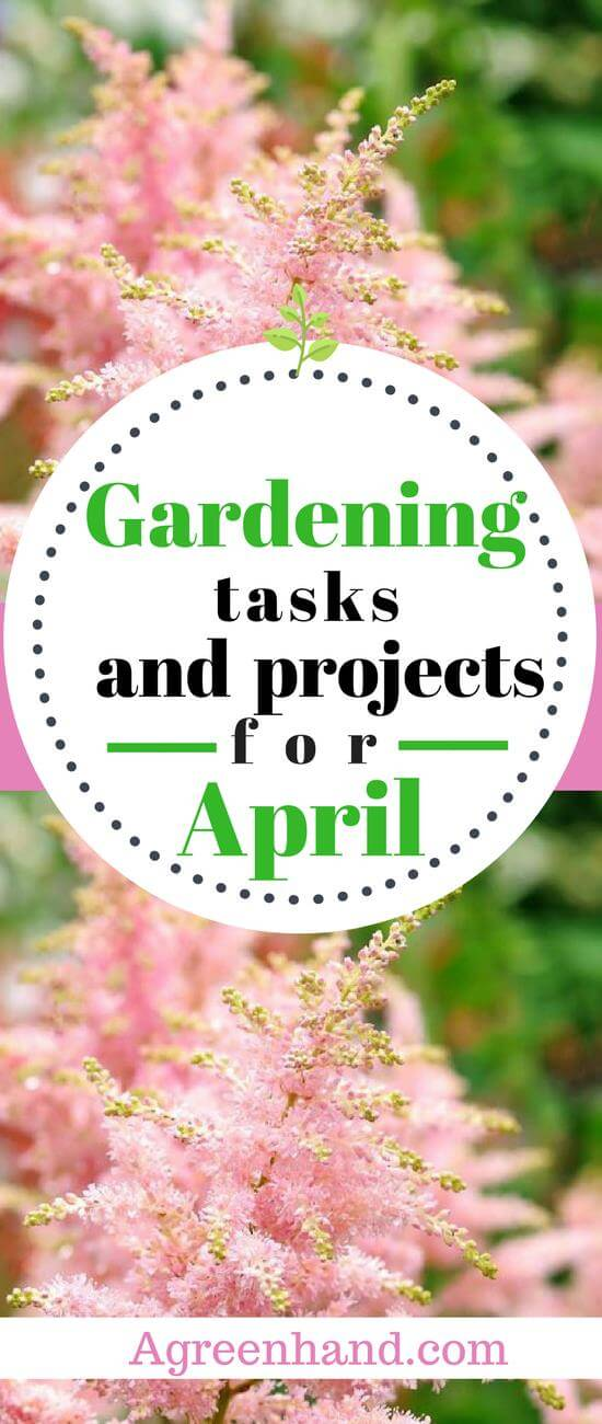 Overall, there are many activities that you can do in your garden in April. Trees and shrubs alike will benefit from pruning. Likewise, April is an ideal month for growing several fruits, flowers, and vegetables. Also, transplanting crops and taking care of your houseplants are recommended.