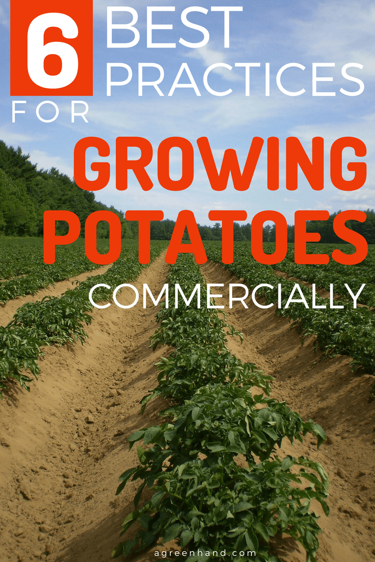 With the huge commercial value of potato as a food crop, it is important for growers to adopt best farming practices to ensure the crops health and the quality of their yields. Here are some suggestions to put into practice.
