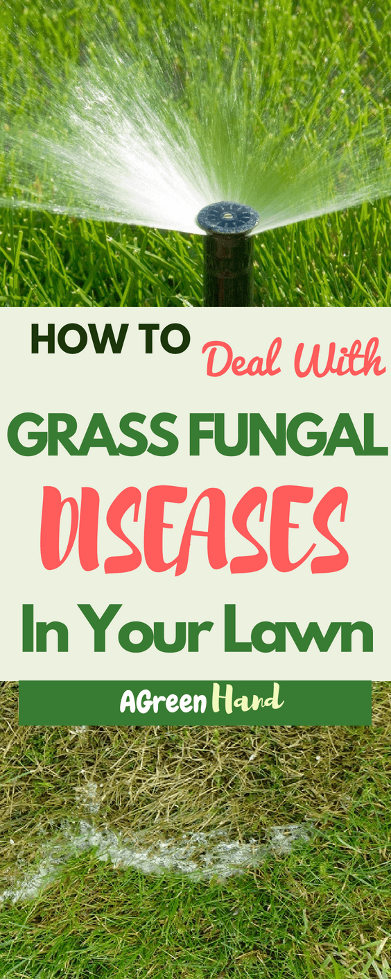 Fungal diseases are notorious for damaging lawns if they aren't dealt with immediately. Even if you've already controlled both pests and weeds, you still need to watch out for the spread of diseases. Here, we'll discuss how to deal with grass fungal diseases in your lawn.