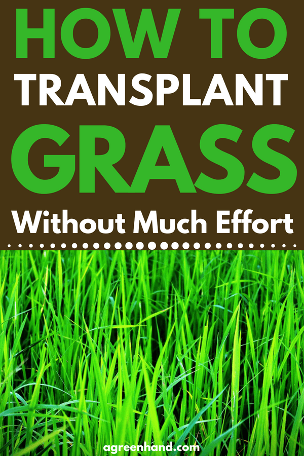 ​Transplanting grass is definitely feasible and not an extremely difficult task. You will need to do some advance planning, though. First things first. The day you choose to transplant grass should be a cloudy day as grass will not dry out.