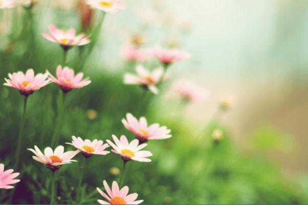Lovingly Luminous: Shining A Light On The Beauty Of Your Backyard 1