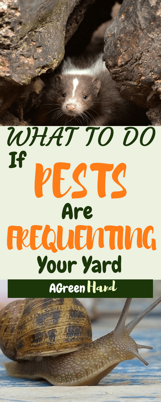 Yard pests can come in a variety of types. You could have a raccoon making a mess or your garbage, wasps swarming your trees or garden shed, or rabbits eating your garden. No matter what type of pest you have, there are a few different solutions you can employ.