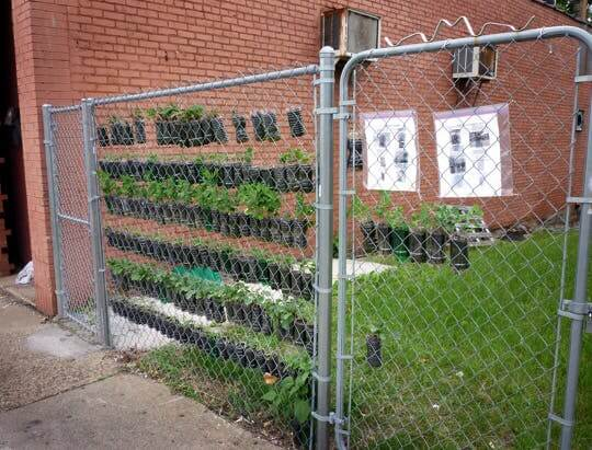 Small Space Vertical Garden Made From Soda Bottles