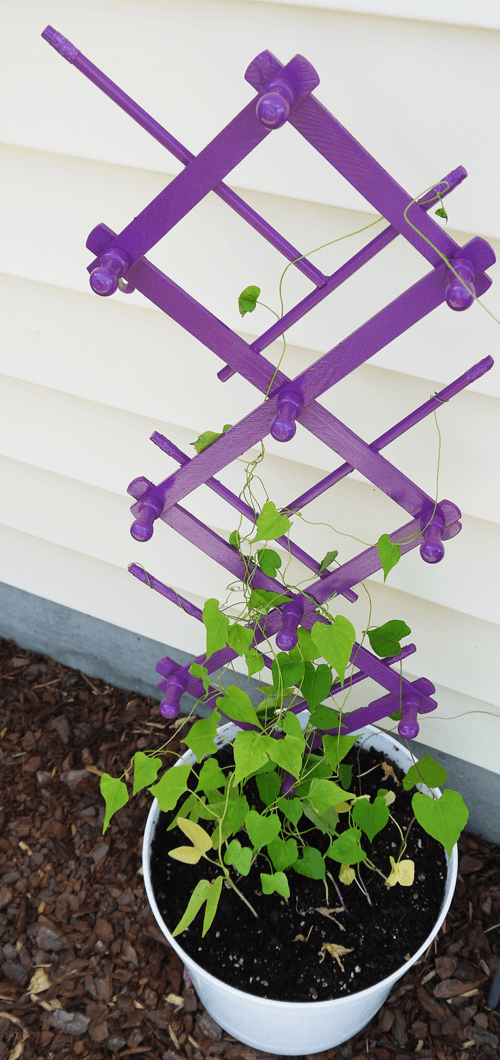 Super Cheap Trellis Idea