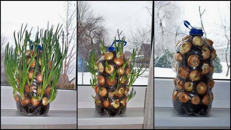 DIY Vertical Onion Planter