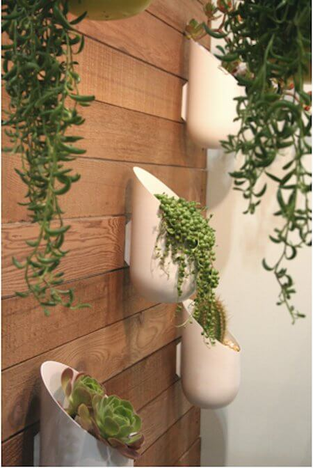 Succulent in Wall Planters