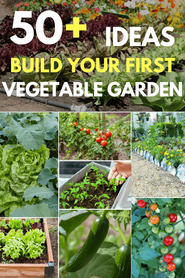 50+ Ideas To Build Your First Vegetable Garden From Experts #vegetable #gardening #gardenideas #roundup #expertreveal