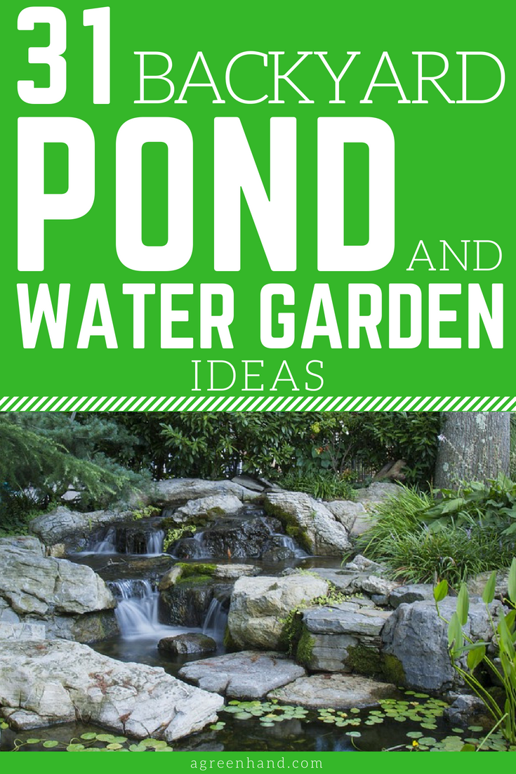 Backyard Pond And Water Garden Ideas
