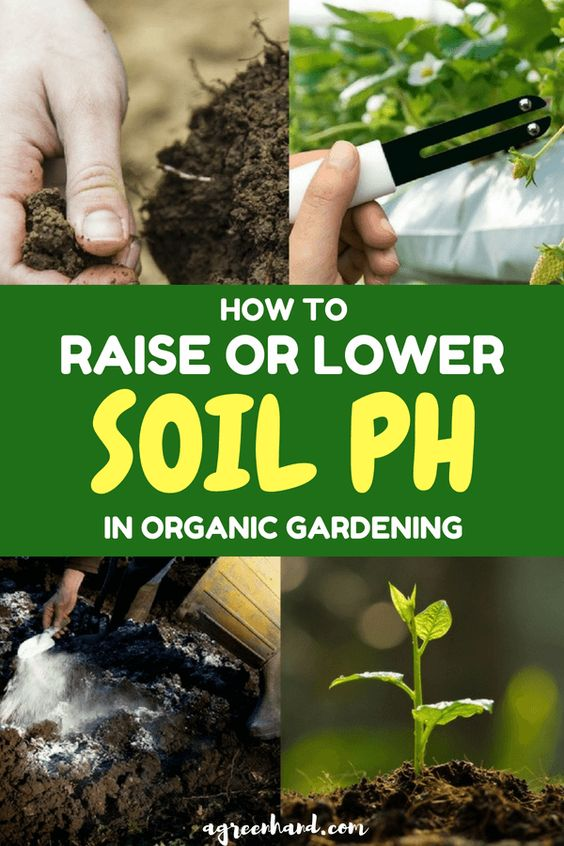 Bringing the pH up and down for soil will require some effort and enough knowledge, but it is vital to ensure the health of your plant. But, not all soils will need either, and so it is always necessary to do some testing.
