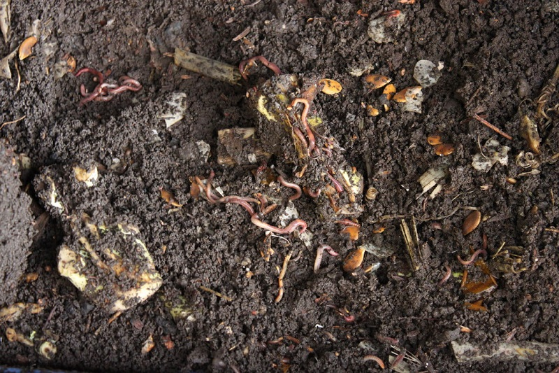Brown Materials And Vermicomposting