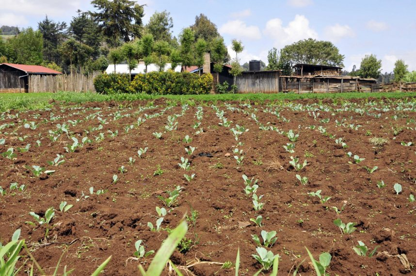 Garden Of Ghana