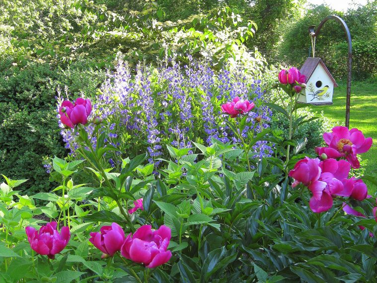 perennial garden that blooms all season
