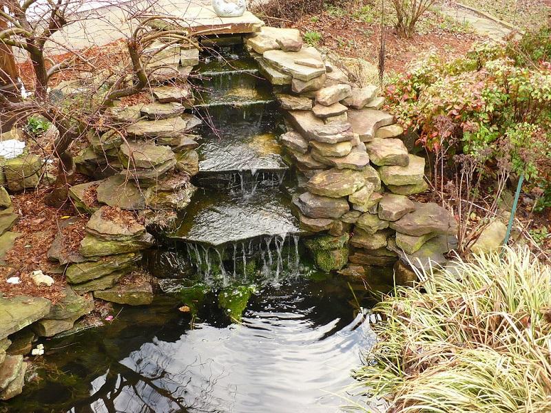 fish pond care