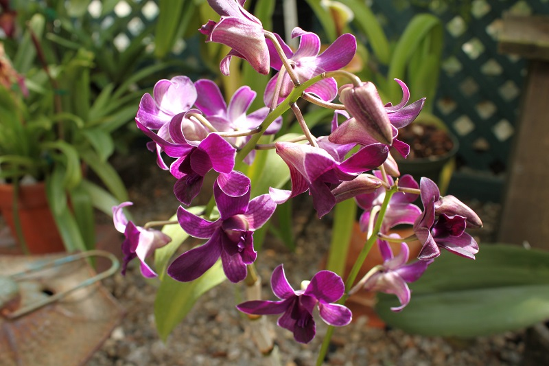 But What About The Actual Orchid Plant It Is Part Of One Largest Families Plants Recorded By Biologists With An Estimated 25 000 Species In