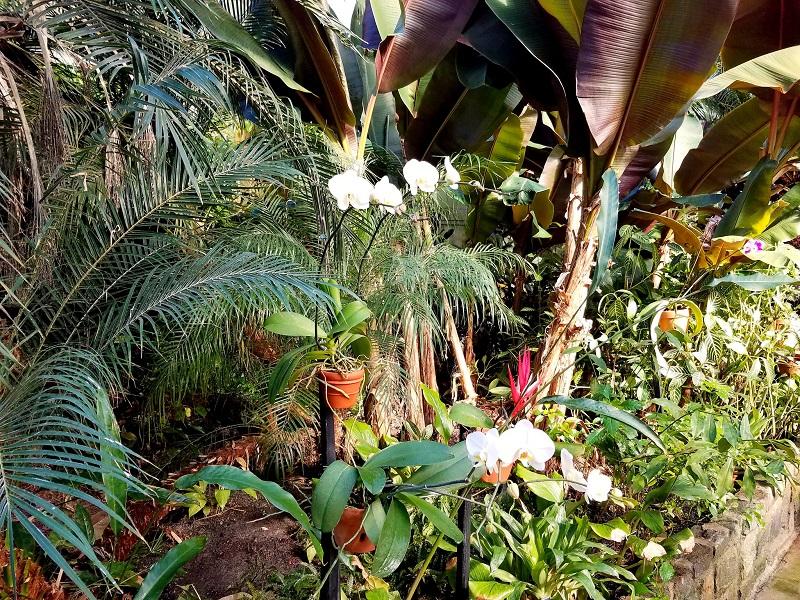 Tropical Garden ideas
