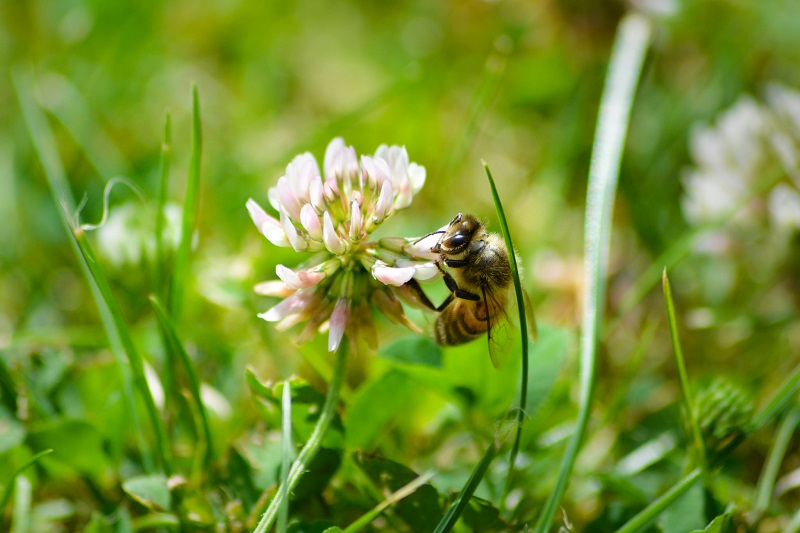 attract native bees