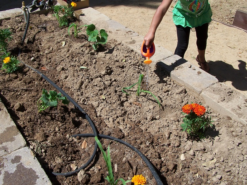 gardening ideas for kids