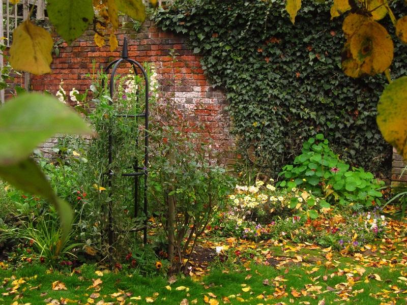Autumn Cleanup in the Wildlife Garden