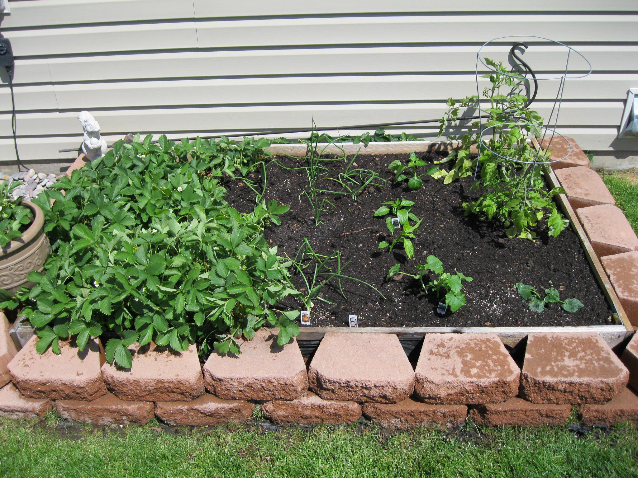 Small Back Yard Garden