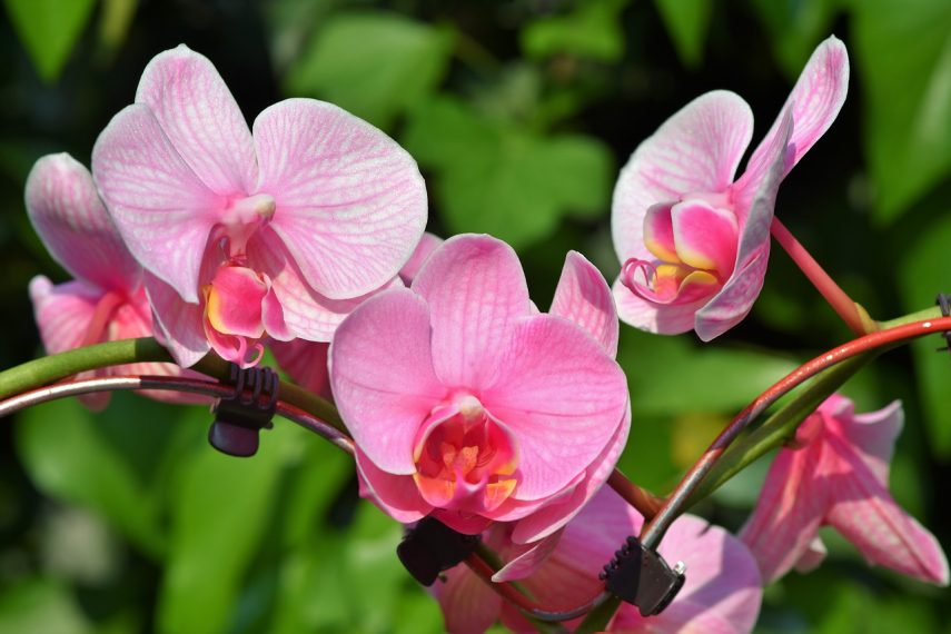 Beginner's guide to growing orchids
