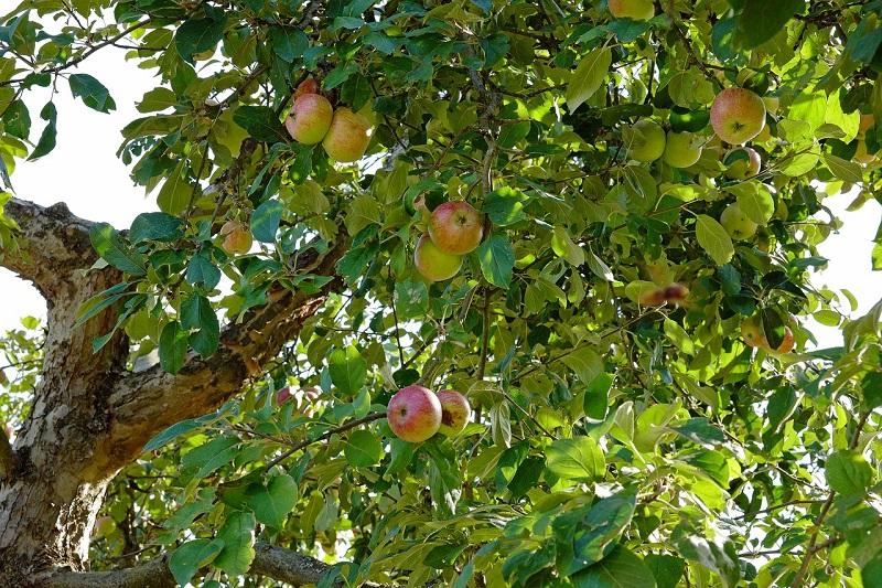benefits of growing fruit trees