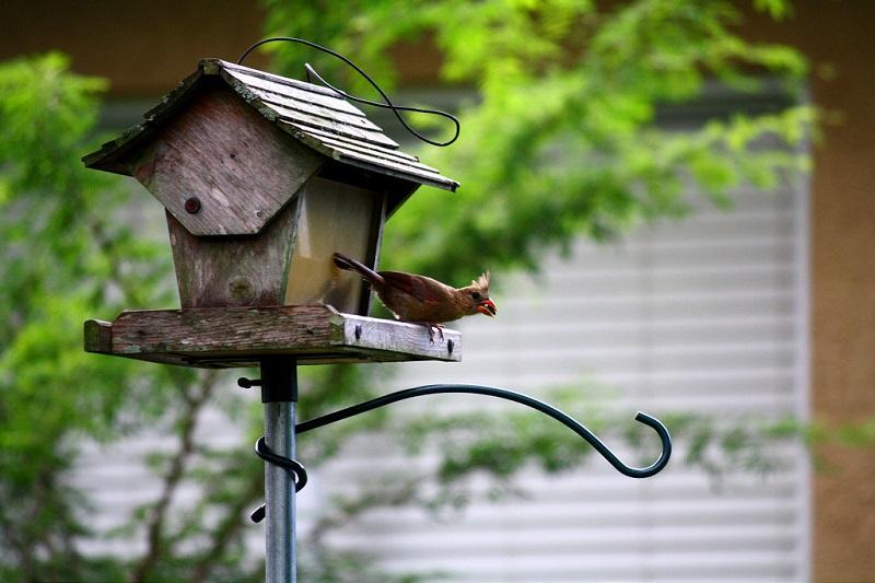 bird friendly garden design