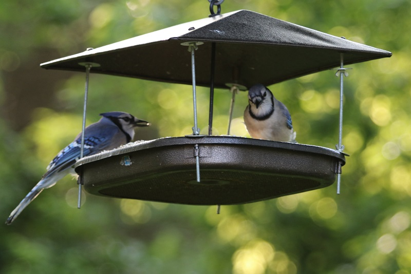 Steps to Birdscaping Your Garden
