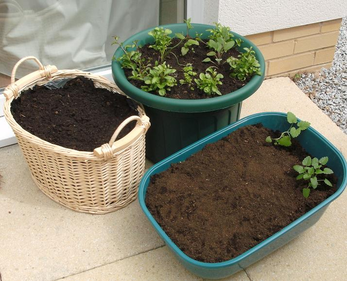 Containers For Garden