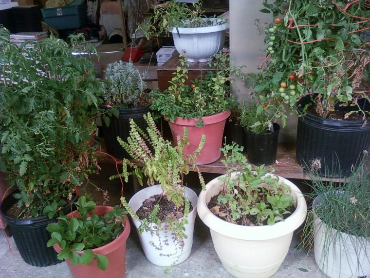 Containers for the Garden