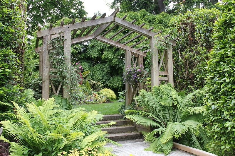 How To Care For Fern Plants