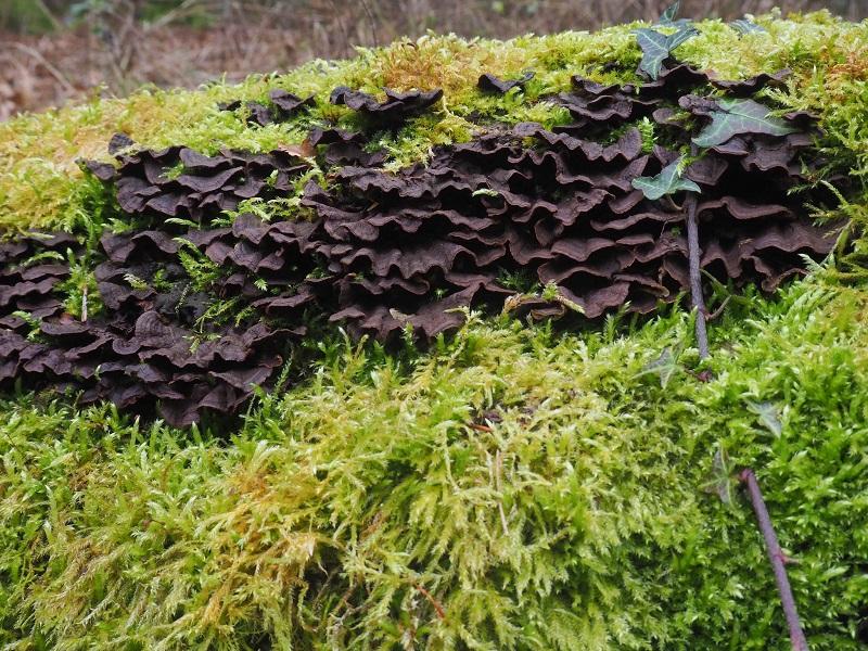 dangers of fungi